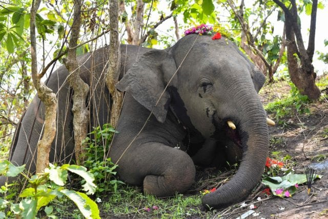 cctv twitter upload 18 ελέφαντες