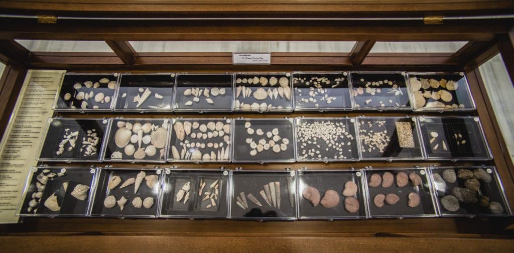 Εκθέματα απολιθωμάτων του Μουσείου Ορυκτών και Πετρωμάτων της ΕΑΓΜΕ