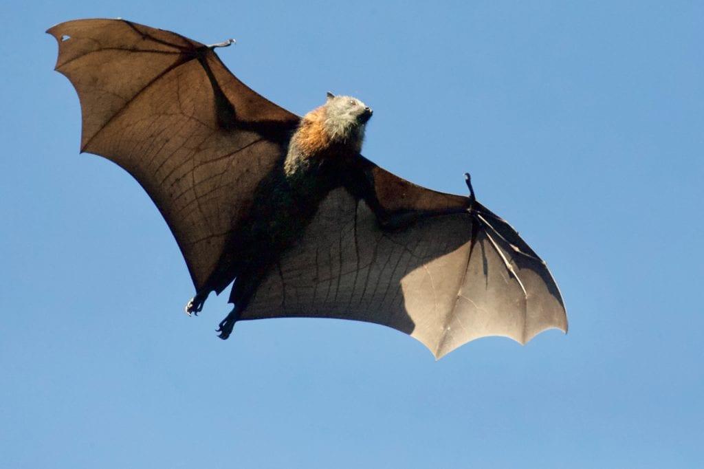 Οι νυχτερίδες οδήγησαν στην εξέλιξη των ραντάρ