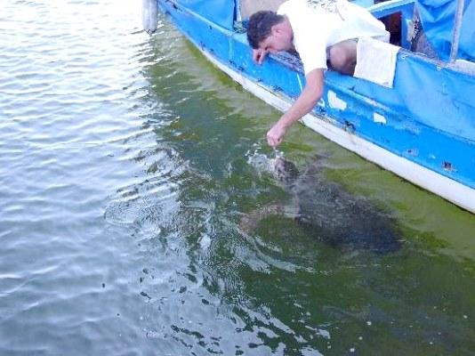 sea turtle patting