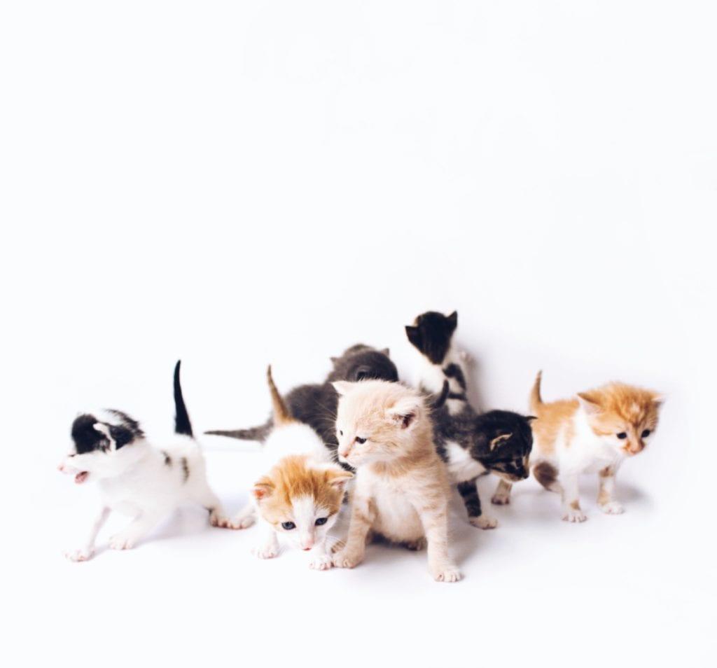 PETS 4