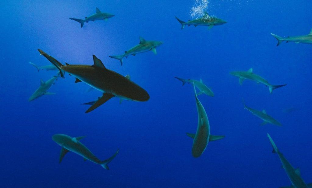 SHARKS3