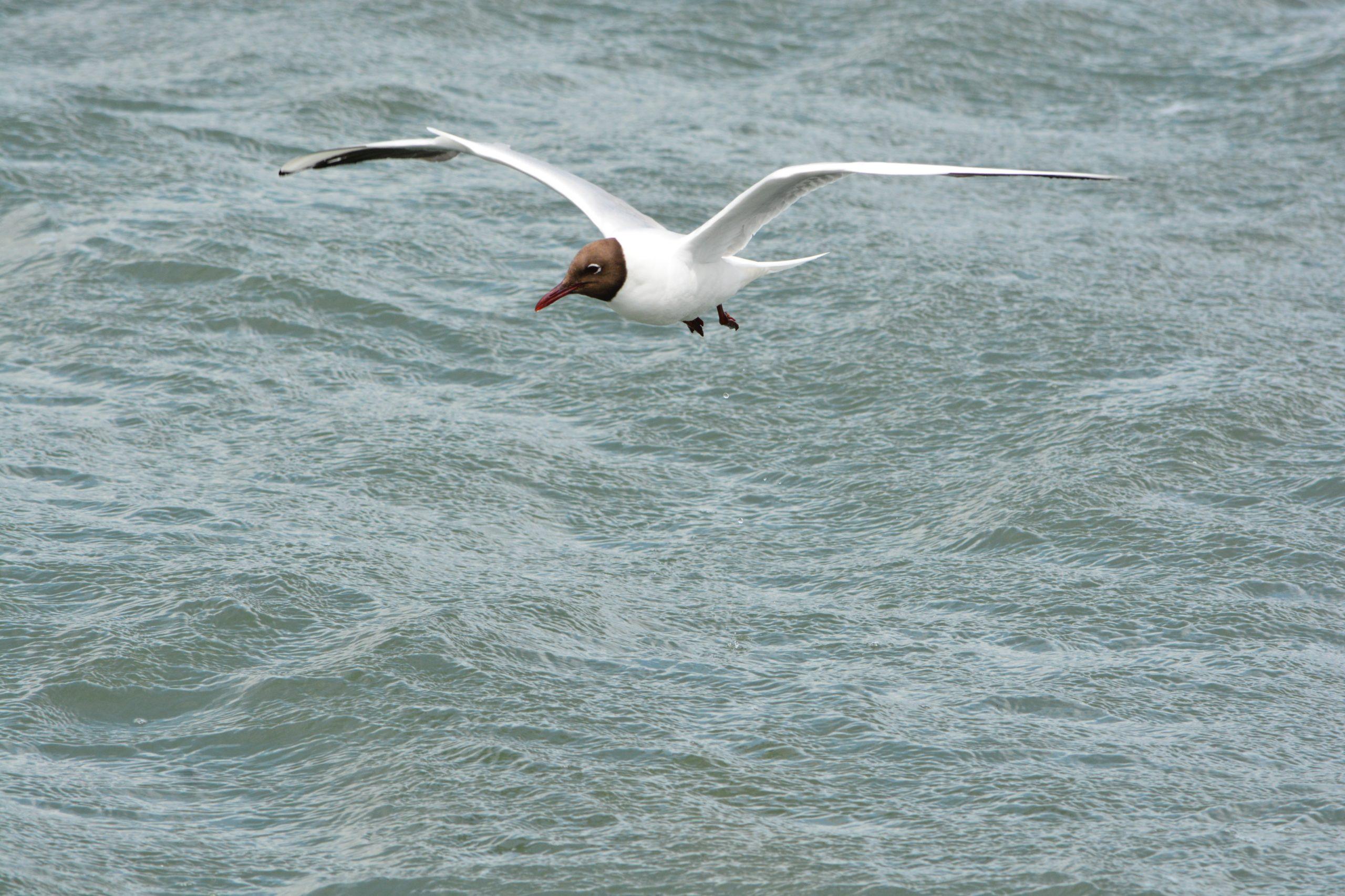 θαλάσσια πουλιά