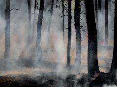 forestfire3
