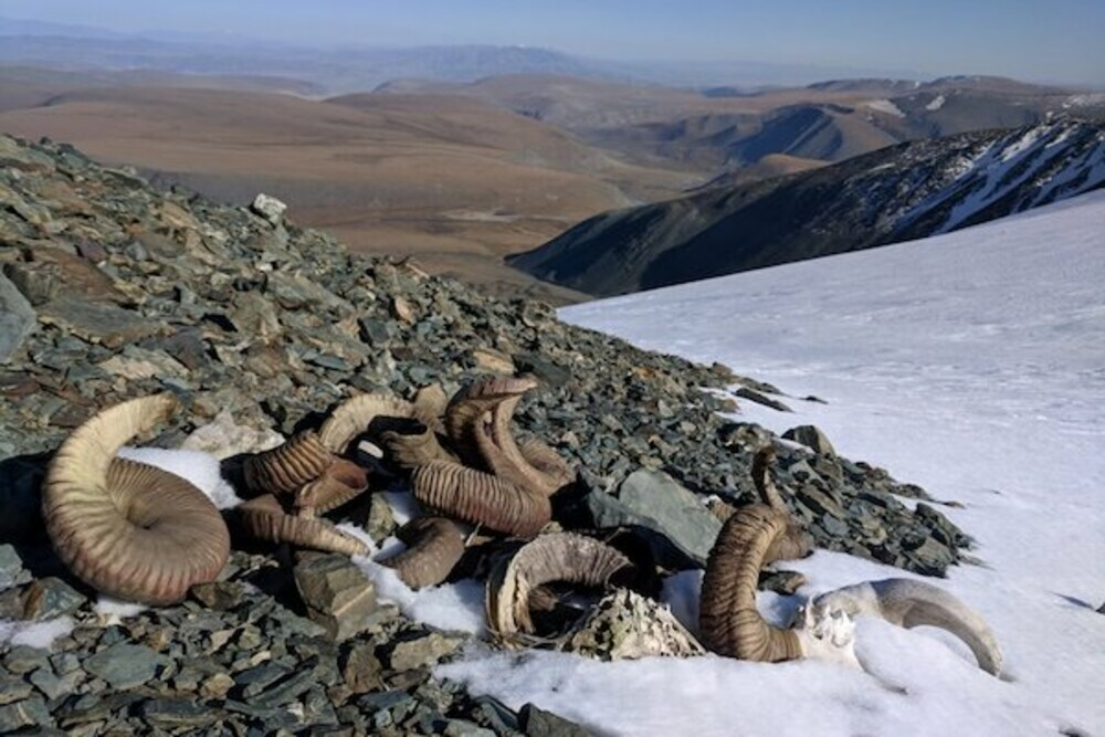 melting mongolian ice