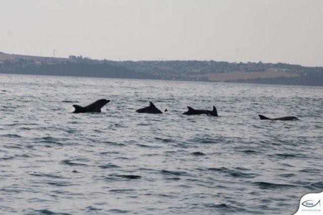 rinodelfina delfinia thermaikos