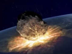 asteroedes
