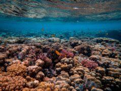κοραλλιογενής ύφαλος - κοραλλιών