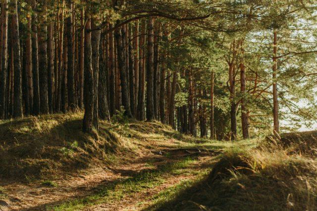δάσος - δέντρα - φύση - αποψίλωση